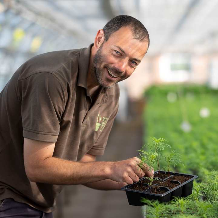 A man smiling in a greenhouse while planting seedlings